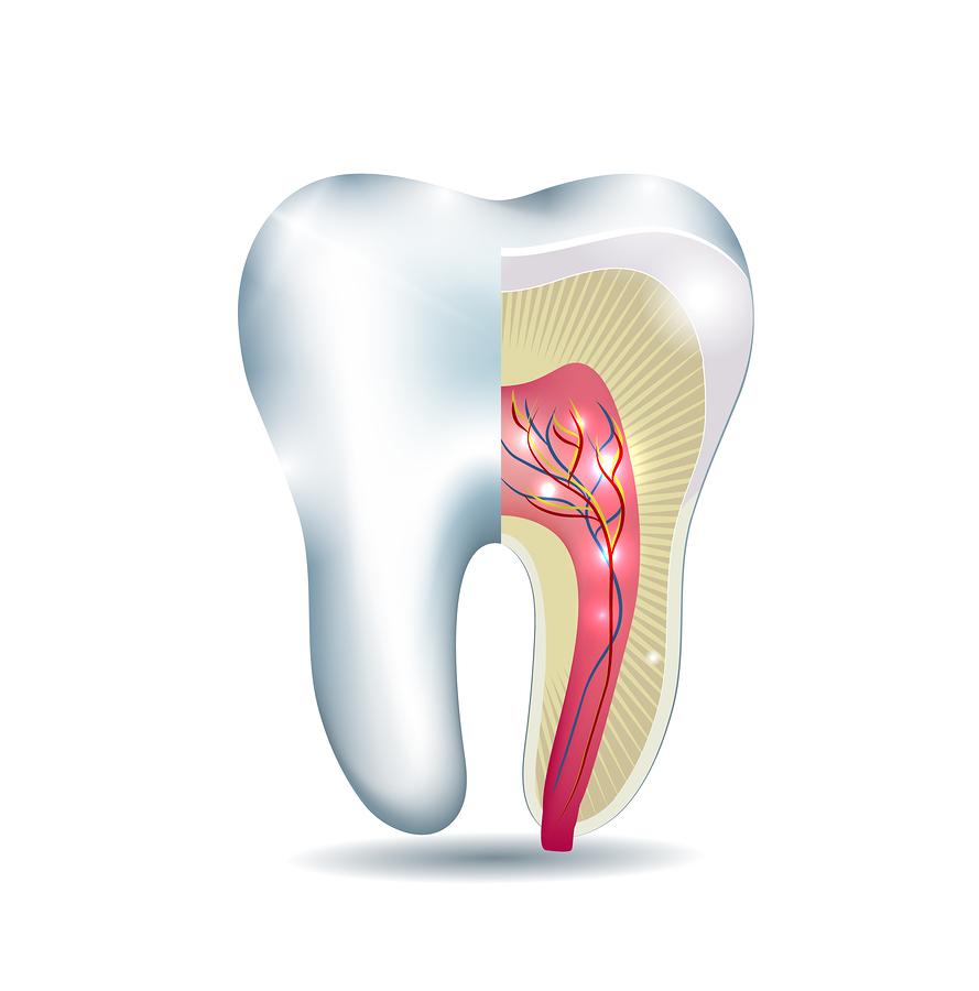 endodontics  u0026 root canals